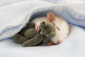 mouse with bear